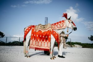 Wind Chase Farm -Florida's premier horse and carriage company
