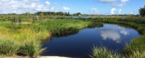 Kitching Creek Preserve