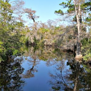 Volunteers for Cypress Tree Planting Project at Jonathan Dickinson State Park Loxahatchee River