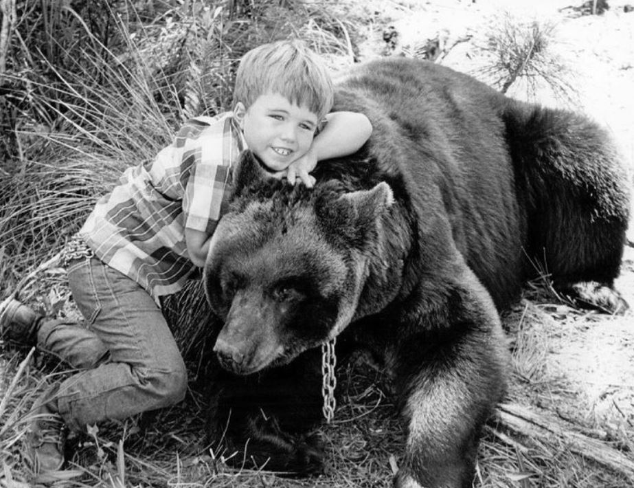 "Clint Howard as ""Mark Wedloe"" with Bruno the Bear as ""Ben"" in 1967"